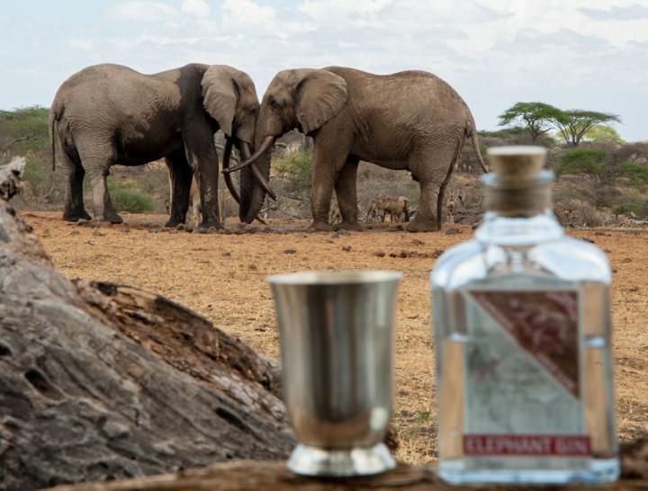 1040EG_Elephants-&-Gin---Ol-Donyo-2