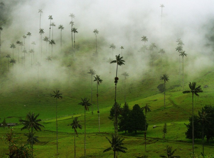 SumakValle-del-Cocora-in-the-Coffee-Region,-Colombia-(pic-by-Zaia)